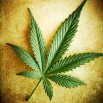 single-cannabis-leaf-280_1